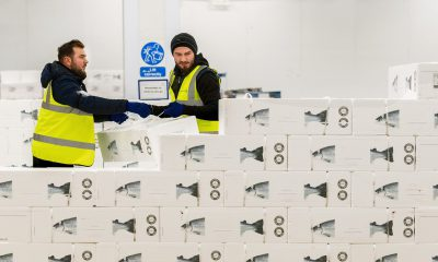 Kuehne+Nagel expands its perishables network with the acquisition of Salmosped in Norway. Image: K+N